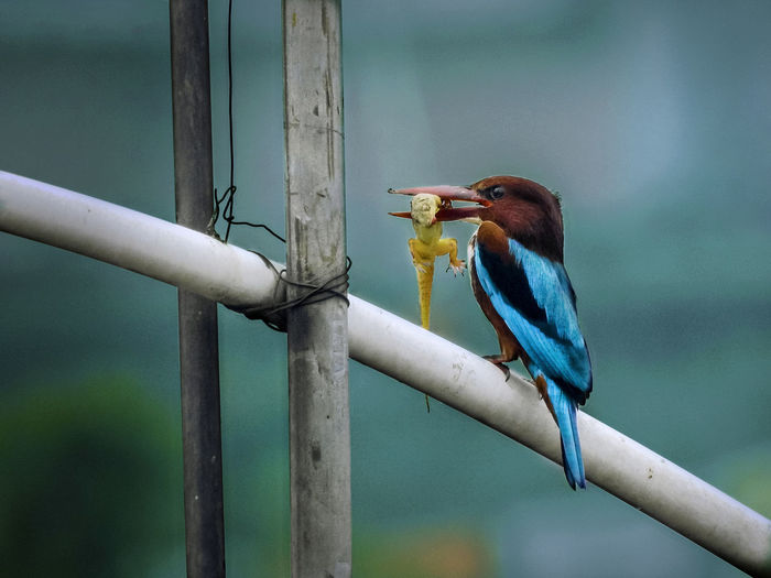 Close-up of bird perching on pipe