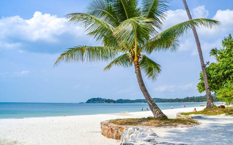 Relaxing Beach Beachphotography Offshore Beach Coconut Tree Beach Resort View Beach Resort