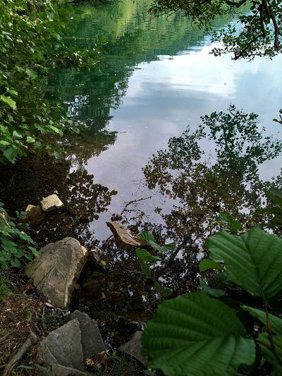 lago Tree Water