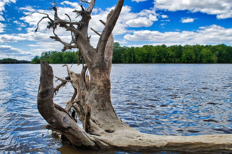 Water Tree Plant Sky Tranquility Cloud - Sky Beauty In Nature Nature Lake Tranquil Scene Scenics - Nature Day Non-urban Scene Trunk No People Tree Trunk Driftwood Wood - Material Beach Outdoors Wood Dead Plant