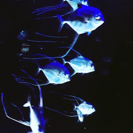 Fish Swimming Water