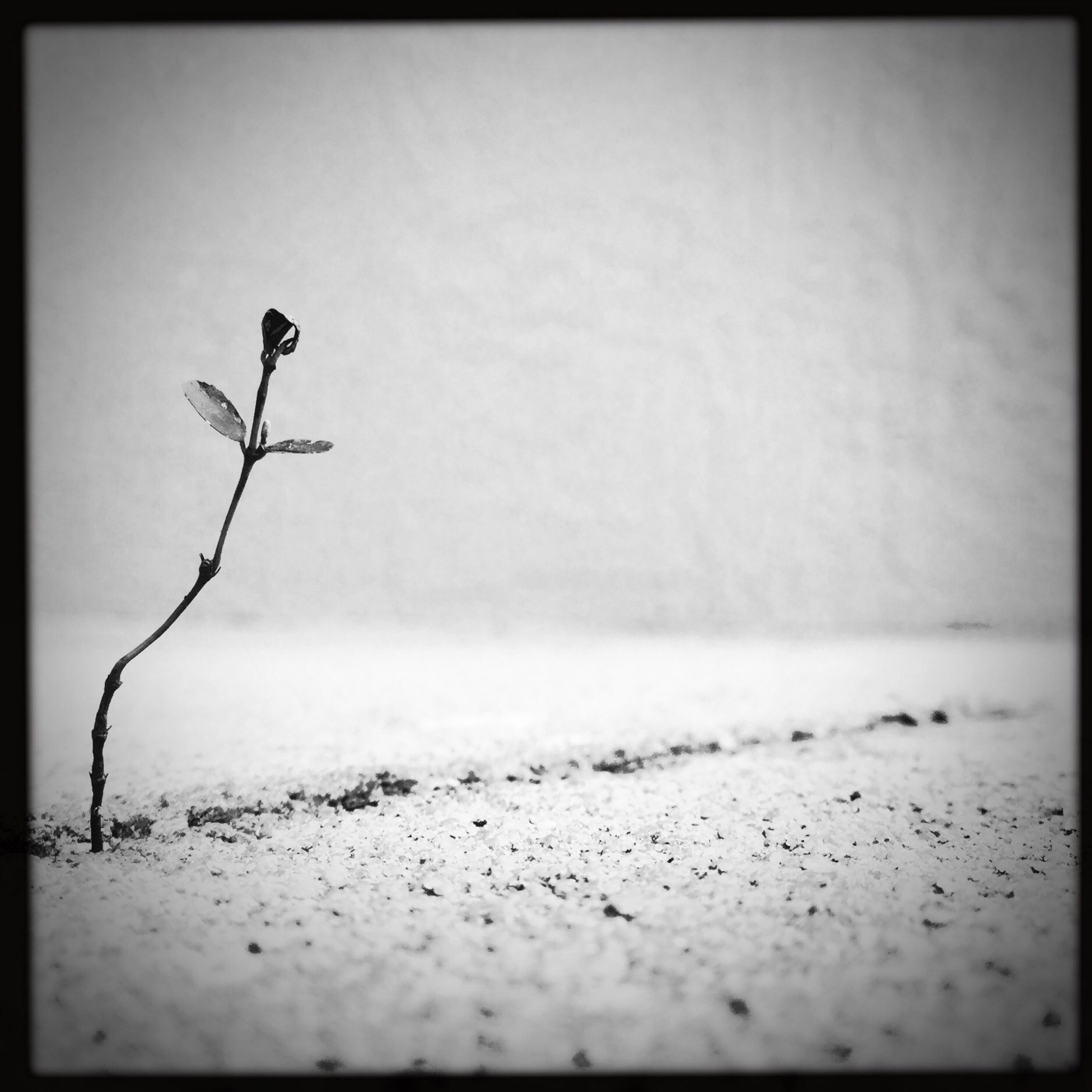transfer print, auto post production filter, copy space, selective focus, clear sky, vignette, nature, close-up, day, twig, no people, wall - building feature, outdoors, stem, plant, dry, tranquility, sky, branch, surface level