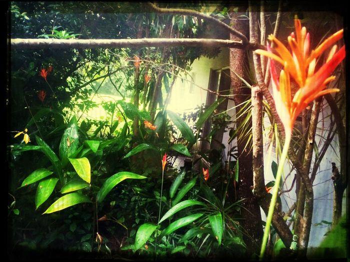 Enjoying Life Bird Of Paradise The Environmentalist – 2014 EyeEm Awards Check This Out