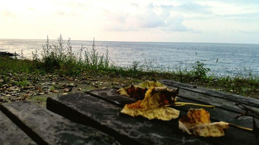 Sea Blacksea Sunset Peace Relaxing Open Edit EyeEm Gallery GalaxyS5 Green Leaves 🌺🍂🍁😌