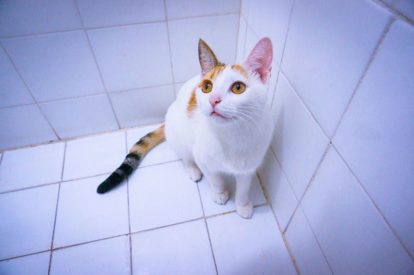 When it's time for the Seniora to take a Shower 🐈 🚿 Cat Cats Cat Lovers Cat Lover Beautiful Beauty Love Those Eyes Yellow Eyes Playful Domestic Cat Pets Portrait Cat Portrait Humor Feline Cute High Angle View Tiled Floor Bathroom Minimal Minimalist Minimalism