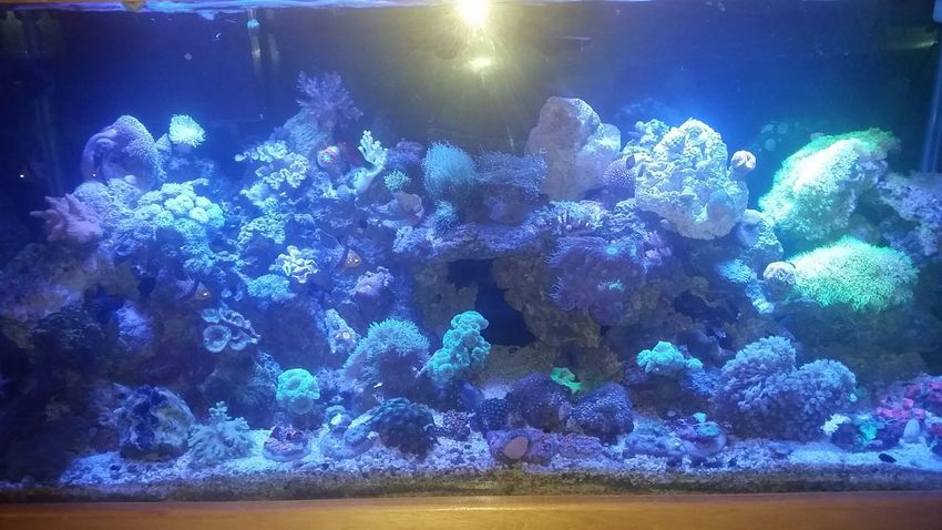 Right now... lights just went off.... Salt Water Ocean Water Coral Reefs My Tank New Edition Anemone Clam Saltwater New Polyps  Mushrooms Zoas