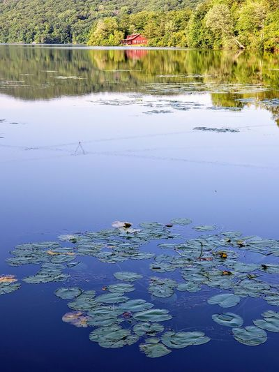 Beauty In Nature Day Floating Floating On Water Flower Lake Leaf Lily Lotus Water Lily Nature No People Outdoors Plant Reflection Scenics - Nature Tranquil Scene Tranquility Water Water Lily Waterfront