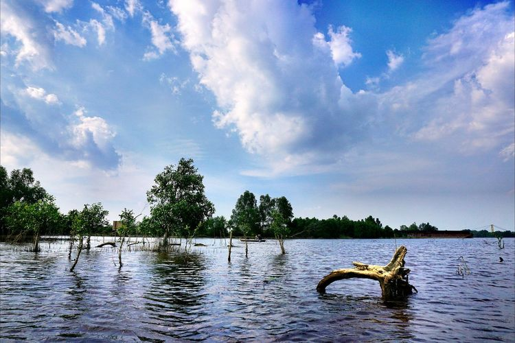 mangrove plant River Water Water Reflections Tree Sky Sky And Clouds Blue Sky Sky_collection Sky And Trees Landscape Nature Water Lake Reflection Sky Cloud - Sky
