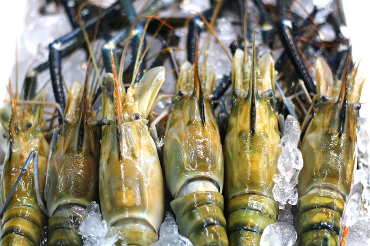 Mahachai Mahachai Market Ice Shrimp Abundance Animal Close-up Food Food And Drink For Sale Fresh Market Freshness Healthy Eating Large Group Of Objects Market No People Raw Food Retail  River Shrimp Seafood Shrimp Heads Wellbeing