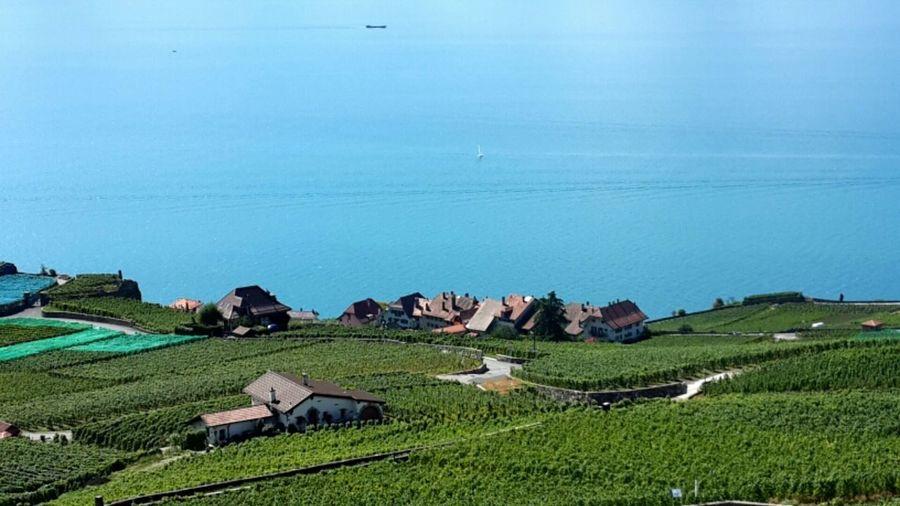 拉沃区里的葡萄园梯田 Chexbres, Switzerland . Photography Traveling Color Photography