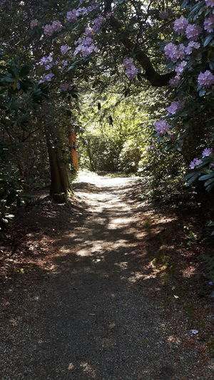 Sunlight falling on footpath amidst plants in forest