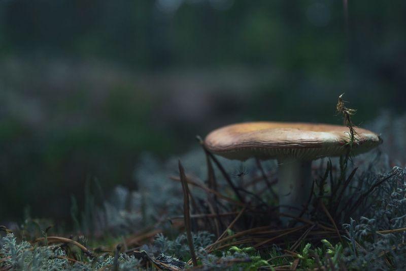 Mushrooms in