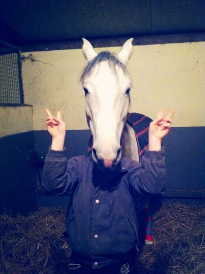 Horse Poney Tornade Hapiness