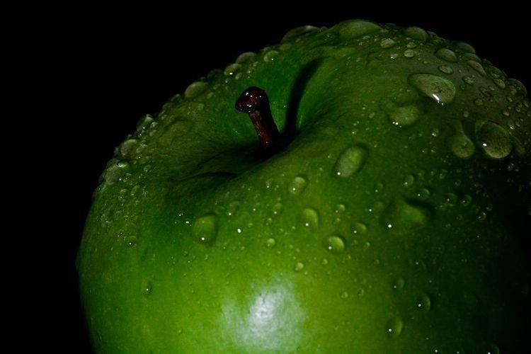 Close-up of wet green leaf against black background