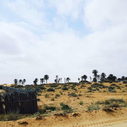 Tunisia Tunisia❤ Tunisia <3 Tunisie Tunisie Terre D'accueil Tunisia_with_love El Faouar Tunisie El Faouar Tunisia Palm Palm Tree Palm Leaf Palmtrees Plams🌴 Kebili Kebilli Tunisia❤