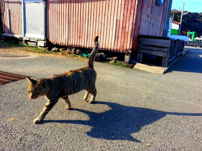 In the cat island. WALK ALONE.