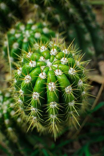 Spiky EyeEm