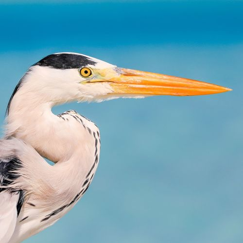Bird Animal Themes Vertebrate Animal One Animal Animals In The Wild Animal Wildlife Beak No People Animal Body Part Nature Side View Close-up Sky Day Outdoors Blue Animal Head  Focus On Foreground Representation