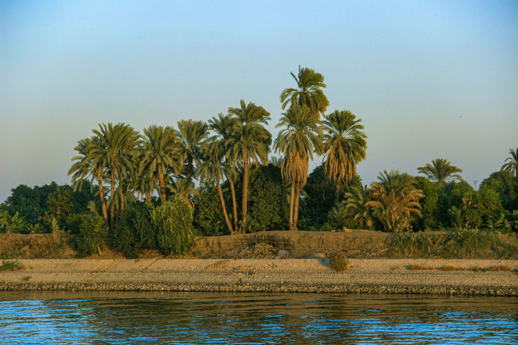 Palm trees by lake against clear sky