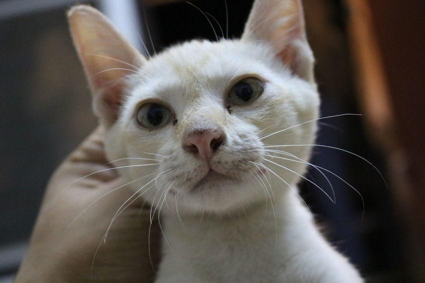 Babycat Outdoors Day Pets Cateyes Cat Lovers Cat Portrait Sleeping Cat Babycat🐱