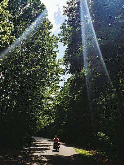 Tree Full Length Forest Sunlight Sky Sunbeam Countryside WoodLand Sun