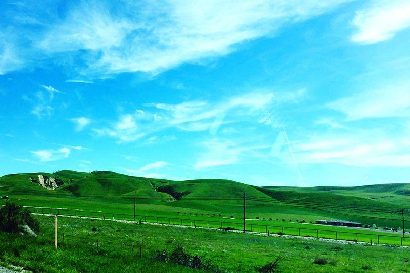 California Coast Green Grass