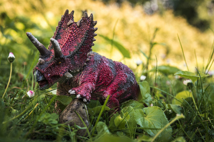 Schleich Dinosaurs Dinosaur Reptile Schleich Schleich Tiere Beauty In Nature Close-up Day Field Flower Grass Growth Jungle Nature No People Outdoors Plant Red