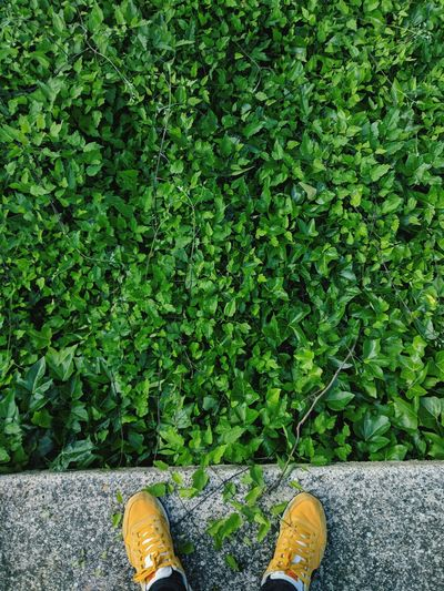 Low section of person in shoes against plants