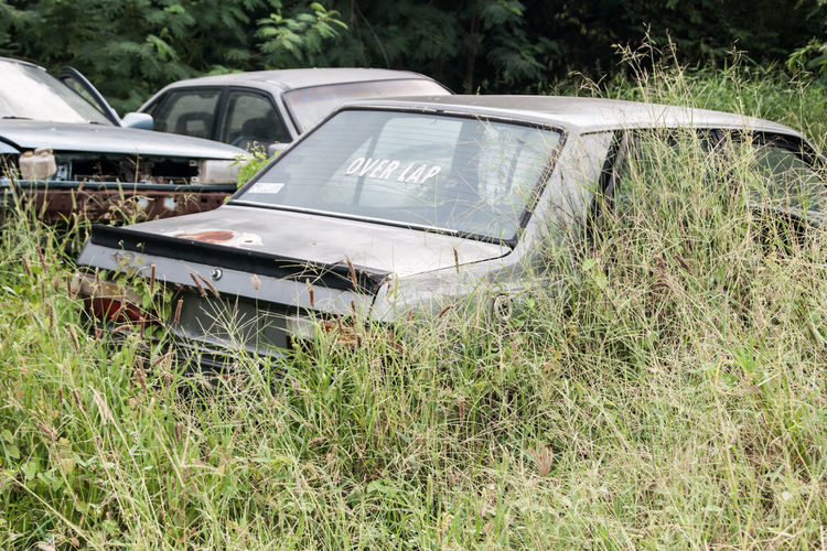 Car Grass Green
