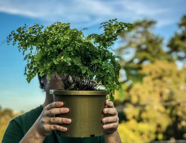 Close-up of person holding potted plant against  clouds, sky and trees.