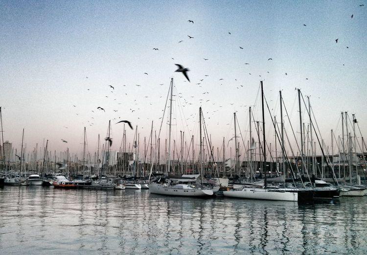 Sailboats at a harbor