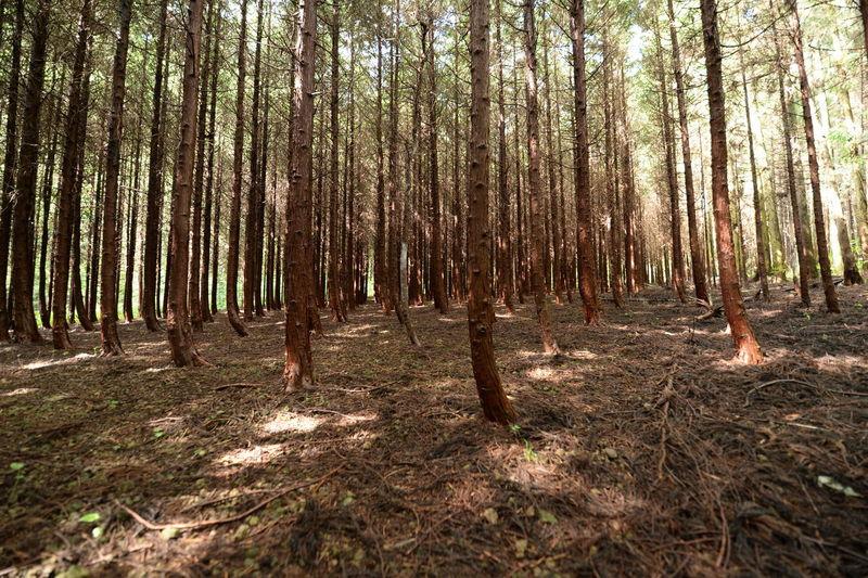大好きなヒノキ山 EyeEm Best Shots - Landscape EyeEm Best Shots - Nature Beautiful Nature Hugging A Tree Trees Forest In The Forest Getting Inspired Tree_collection