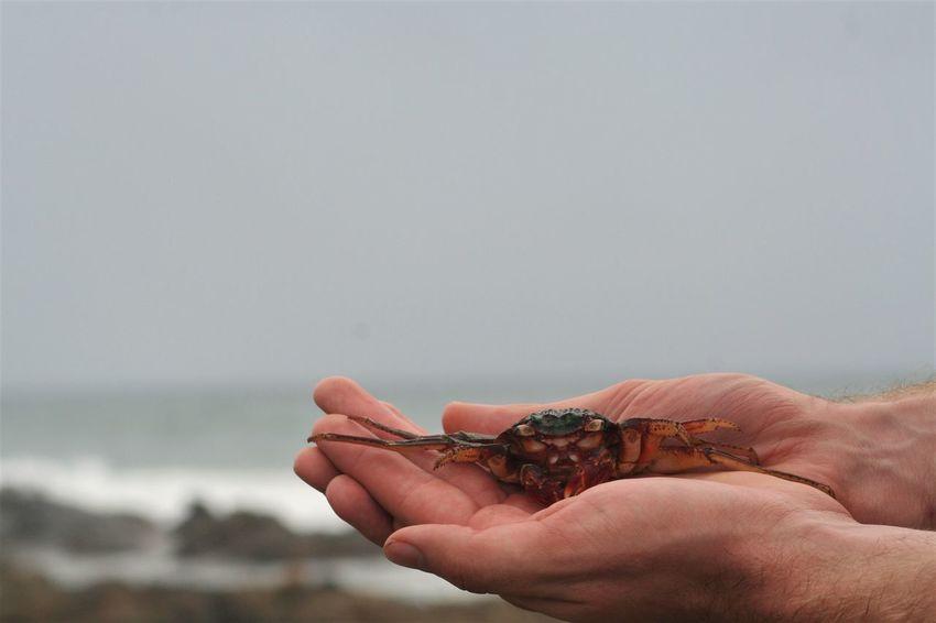 Crab Animal Themes Beach Beauty In Nature Close-up Holding Horizon Over Water Human Body Part Human Hand KwaZulu-Natal Coast Nature One Animal Outdoors Sea Sea Life
