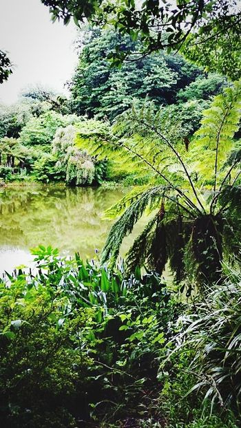 Water Reflection Nature Lake No People Day Tree Forest Beauty In Nature First Eyeem Photo