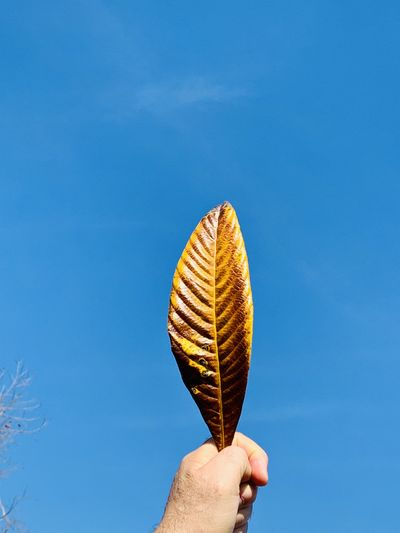 Low angle view of hand holding leaf against blue sky