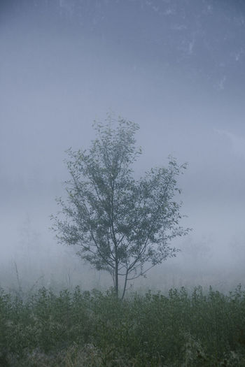 mist Beauty In Nature Day Environment Field Fog Forest Grass Growth Hazy  Isolated Land Landscape Nature No People Non-urban Scene Outdoors Plant Scenics - Nature Sky Tranquil Scene Tranquility Tree
