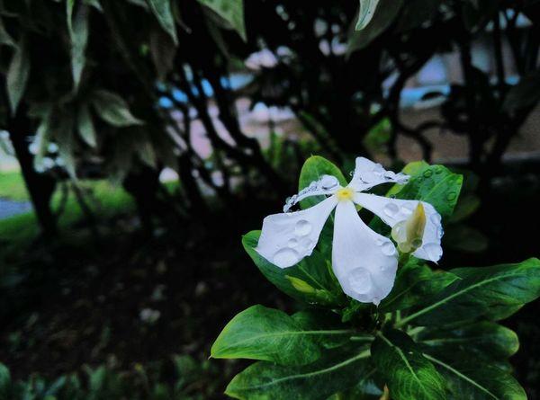Flowers Nature Plant Onepluslife Oneplus X Smartphonephotography MyClick Mumbai Cool Enjoying Nature