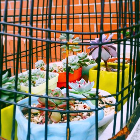 Succulent Succulents Succulent Plant Succulent Plants SucculentsLover Succulentgarden Hello World Hi! Relaxing Taking Photos Enjoying Life Literature_of_life Plant Taking Photos Relaxing Hello World