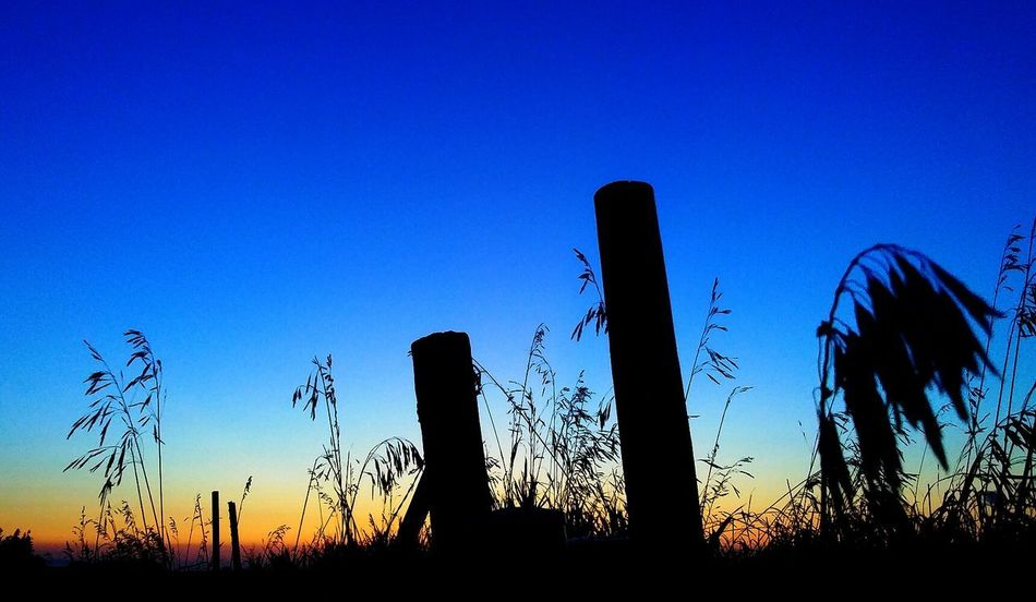 Silhouette Growth Nature No People Blue Outdoors Scenics Sky Sunset Plant Beauty In Nature Rural Scene Multi Colored The Week On EyeEm Pretty♡ Iowa Sunlight Check This Out Picturejunkie Orange Color Tranquility Beauty In Nature Low Angle View Fencing Night