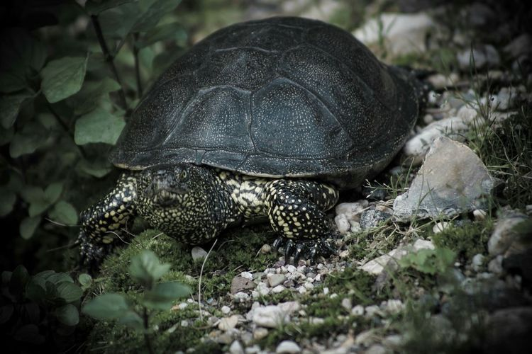 Schildkröte im Wildpark Leipzig