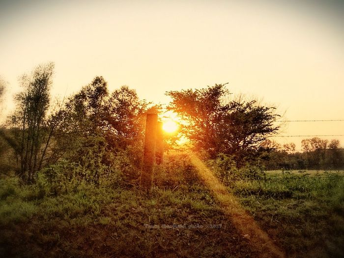 Sunset Nature Sun Sunlight Sunbeam Beauty In Nature Tree Lens Flare Scenics Tranquil Scene Field Tranquility Grass Landscape Outdoors No People Sky Growth Silhouette Clear Sky