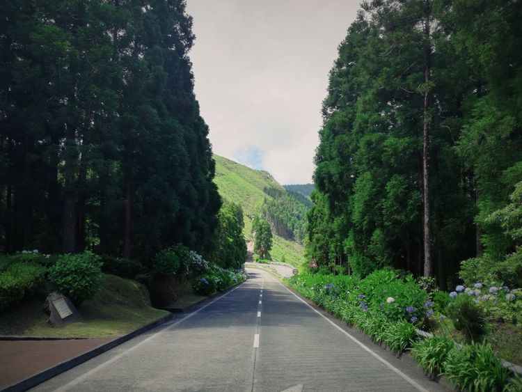 Nature Tree Outdoors Beauty In Nature Road Azores Portugaldenorteasul Portugal_em_fotos Portugalcomefeitos Green The Way Forward Green Color No People Growth Nature Day Plant Sky First Eyeem Photo EyeEmNewHere