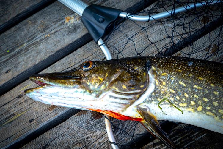 Close-up of fish on fishing net