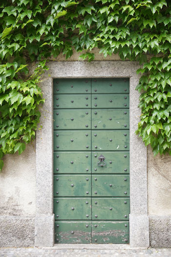 Green door in Varenna with overhanging Ivy Architecture Plant Built Structure Green Color Closed Door Building Exterior No People Ivy Plant Part Leaf Building Entrance House Growth Outdoors Green Old Door