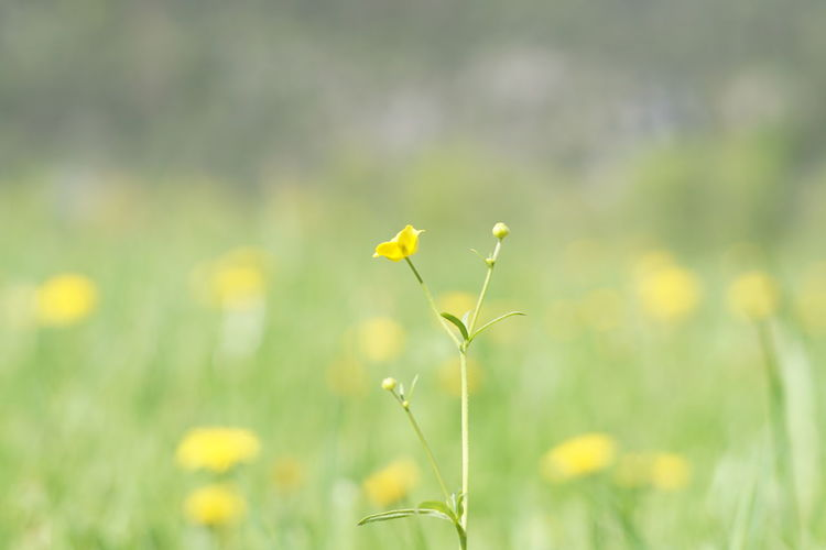 Natural Backgrounds are beautiful. spring into spring Spring Has Arrived Wildlife & Nature Grass Springtime Blossoms Colorful Green Yellow Blurred Motion Blurred Motion Vision Dream Advertising Beautiful Beauty In Nature Beauty Flower Flower Head Cereal Plant Rural Scene Yellow Springtime Summer Field Uncultivated Oilseed Rape Flowering Plant In Bloom Botany Plant Life