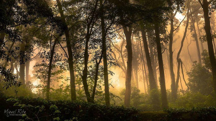 Serra De Sintra Portugal Forest Mist