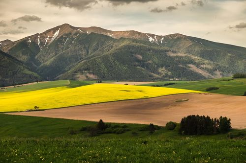 Colors Slowakia Beauty In Nature Cloud - Sky Day Grass Landscape Mountain Mountains Nature No People Plant Scenics - Nature Sky Trawel Yellow