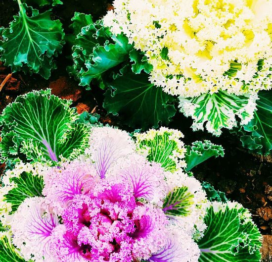 Flouwers Flowers