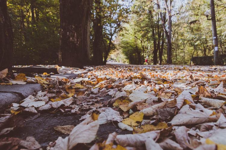 Autumn leaves fallen on land