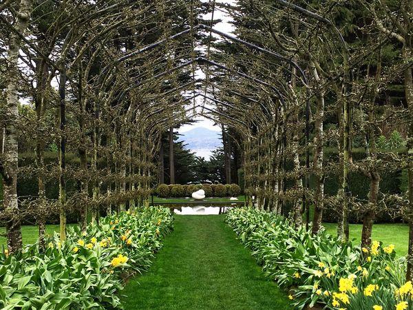 Wonderful gardens near Dunedin New Zealand , love the symmetry of this garden trellis. Green Color Plant Outdoors Freshness Tranquil Scene
